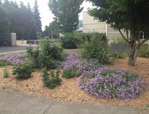 Intergenerational garden