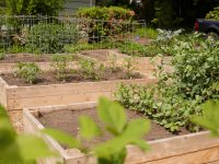 Raised garden beds 200x150 Food Growing, Organic Landcare, Home Construction, & Custom Landscapes